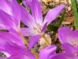 秋の紫の花